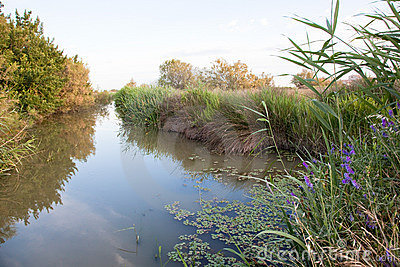 A pond in the country