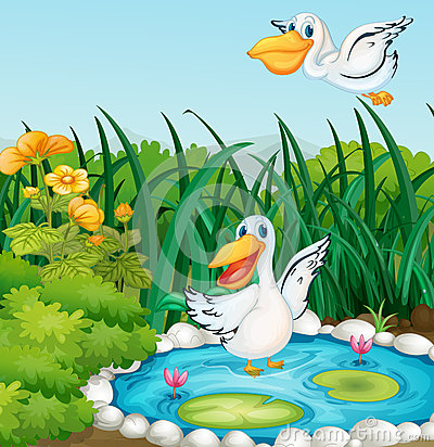 A pond with ducks