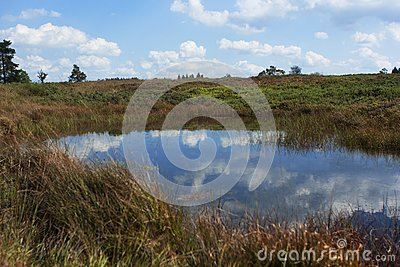 Pond In The Fagnes Stock Image - Image: 22501471