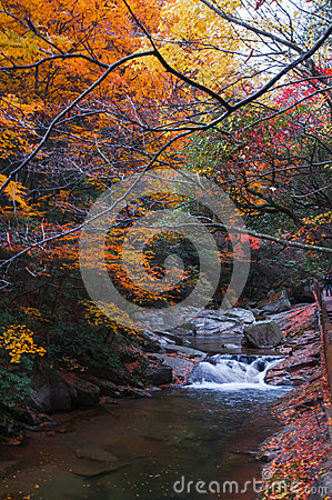 Free Pond In Autumn Forest Stock Photo - 46583670