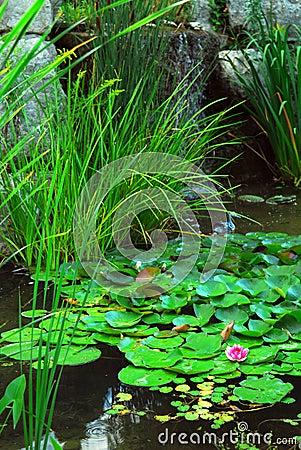 Free Pond Landsaping Royalty Free Stock Photos - 3107898