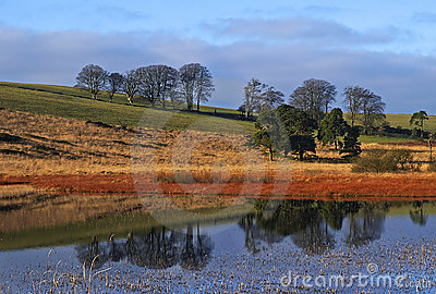 Pond Landscape