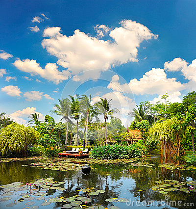 Pond with lush tropical plants