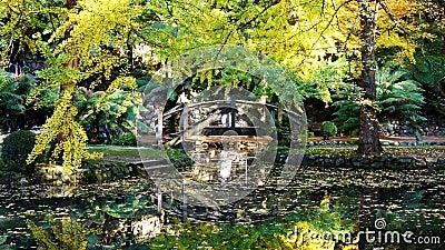 Pond met glorieuze herfstreflecties stock video