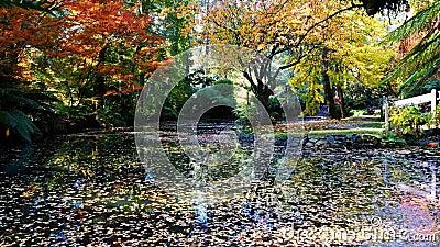 Pond met glorieuze herfstreflecties stock footage