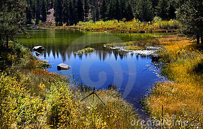 Pond and reflections