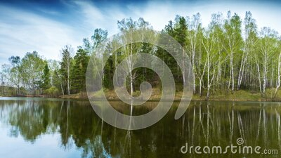 Pond in spring forest under clouds stock footage