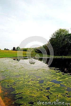 Pond in springtime 2