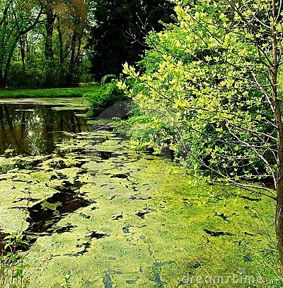 Pond in springtime 3