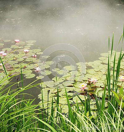 Pond with water lilies and mist