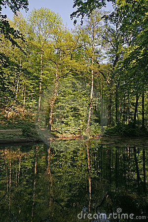Pond with water reflection in Lower Saxony, German