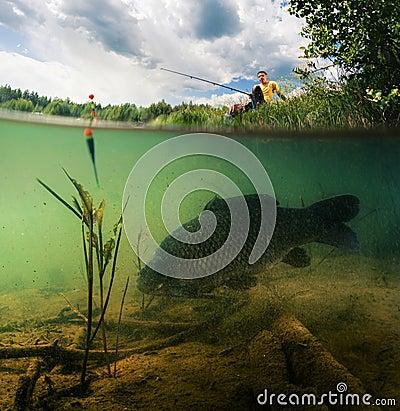 Free Pond With Carp Royalty Free Stock Photos - 56741238