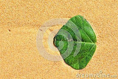 Ponga verde la hoja en arena de oro
