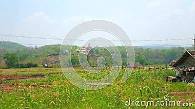 Pont en bambou du Su Tong Pae parmi les champs, Mae Hong Son, Thaïlande clips vidéos