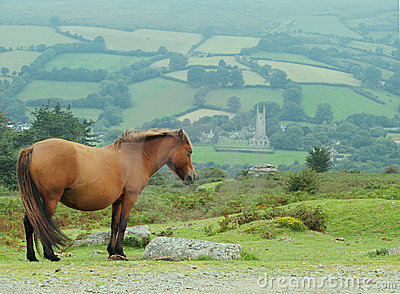 Pony Atop Hill Royalty Free Stock Photo - Image: 3292625