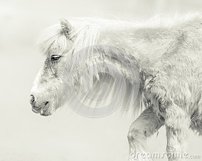 Pony With Handsome Long Mane