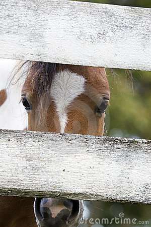 Pony looking through fence