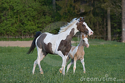 Pony mare with little foal