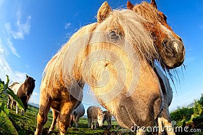 Pony muzzle on pasture close up