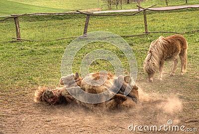 Pony s Play
