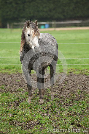 Pony on typical autumn pasturage