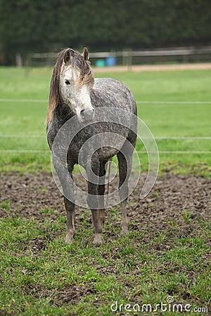 Pony on typical autumn pasturage