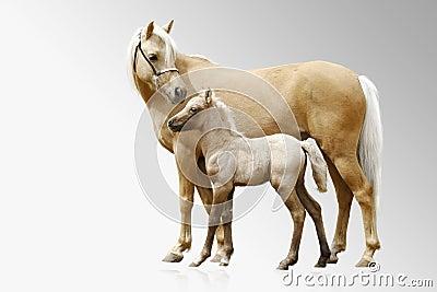Ponys Stute und Fohlen