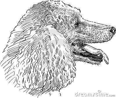 Poodle head