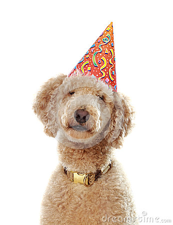 Poodle Birthday Hat