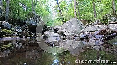 Pool de Água Fresca - Hazel River Shenandoah Virginia video estoque