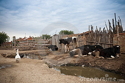 Poor housing in a village