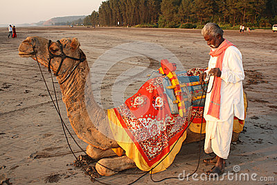 Camel Business Editorial Stock Image