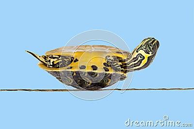 Poor sick turtle