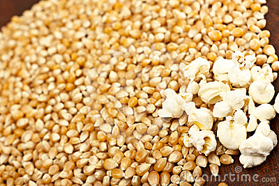 Pop-corn and corn grain