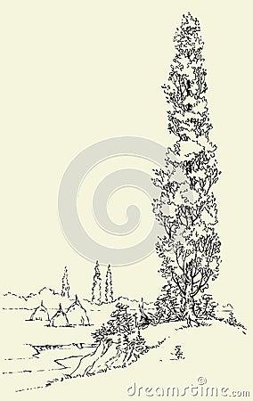 Poplar on the hill