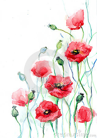 Free Poppies Royalty Free Stock Images - 21932099