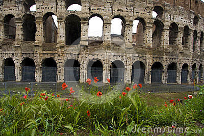 Poppies In Front Of Colliseum Stock Images - Image: 24472574