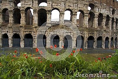 Poppies in front of Colliseum