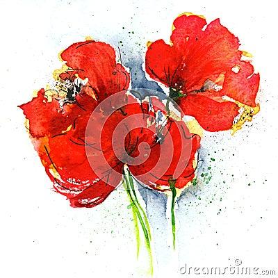 Free Poppies On White Royalty Free Stock Photo - 5950255