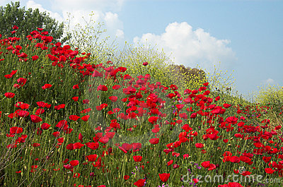 Poppies and sky diagonal
