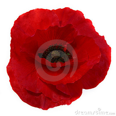 Free Poppy Royalty Free Stock Image - 11100006