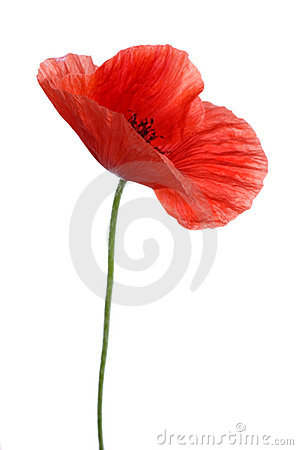 Free Poppy Stock Images - 11984084