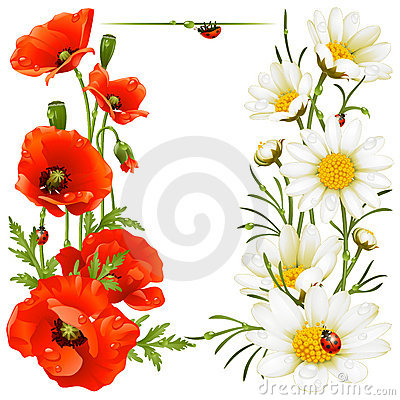 Free Poppy And Camomile Design Elements Royalty Free Stock Photography - 15607327
