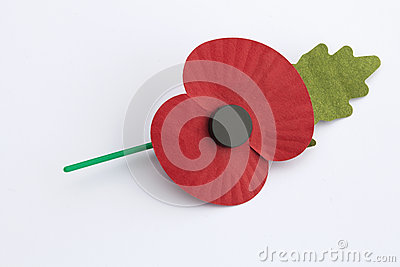 Poppy Appeal for Remembrance / Poppy Day -  on White Bac