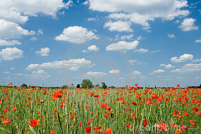 Poppy and clouds
