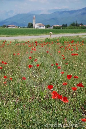 Free Poppy Field 3 Stock Photo - 5256320