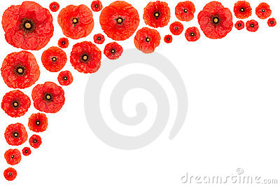 Poppy flower frame