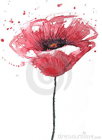 Free Poppy Flower, Watercolor Royalty Free Stock Image - 19884256