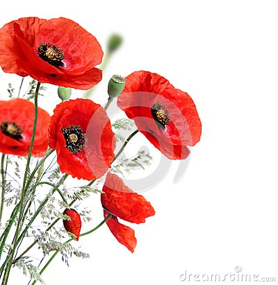Free Poppy Flowers Royalty Free Stock Photos - 33102258