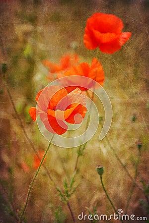 Poppy flowers on antique grunge texture background